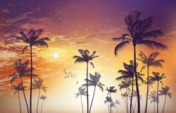 Silhouette of tropical palm trees at sunset or sunrise, with cl. Oudy sky . Highly detailed and Royalty Free Stock Images