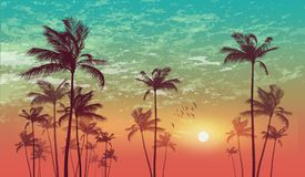 Silhouette of tropical palm trees  at sunset or sunrise, with cl. Oudy sky . Highly detailed  and Royalty Free Stock Photos
