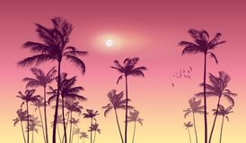 Silhouette of tropical palm trees at sunset or sunrise, with cl. Oudy sky . Highly detailed and Stock Photography