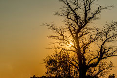 Silhouette of tropical sunset with  trees, Thailand. Stock Photos