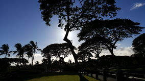 Silhouette of tropical trees. Trees swaying in the wind in Wailea Maui Stock Image