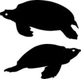 Silhouette of turtles Stock Photo