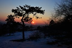 Silhouette of twisted pine tree in winter sunset, snow covered fields in background royalty free stock images