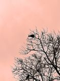 Silhouette of two birds sitting in a tree Royalty Free Stock Photography