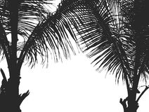 Silhouette two coconut trees Royalty Free Stock Image