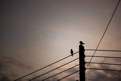 Silhouette two couple bird perched on electric pole. With copy space. Beautiful sunset or sunrise background. Landscape Stock Photo