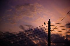 Silhouette two couple bird perched on electric pole. With copy space. Beautiful sunset or sunrise background. Landscape Stock Photography