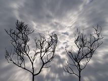 Close-up silhouette of two dry leafless dead trees with motion darkness storm clouds approached on dramatic scary sky background. Silhouette of two dry leafless stock photo
