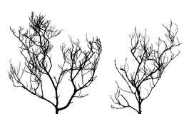 Silhouette of two dead trees. Isolated on white background Stock Images