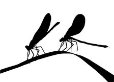 Silhouette two dragonflies Stock Photo