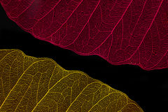 Silhouette two leaf red and yellow royalty free stock image