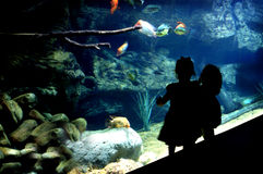 Silhouette Two Little Girls at Public Aquarium Stock Images