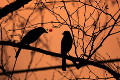 Silhouette Of Two Love Birds Stock Image