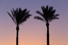 Silhouette of two palm trees against sky Royalty Free Stock Photo