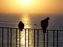Italy, Sorrento: Pigeons in sunset. Silhouette of two separated pigeons in the Sorrento sunset Royalty Free Stock Photo