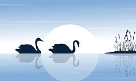 Silhouette of two swan on lake scenery Royalty Free Stock Photos