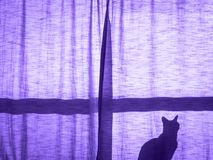 One cat behind curtain sunset. Silhouette ultra violet shadow of a small cute cat sitting alone on the window sill behind the curtain moon night light, copy Stock Photos