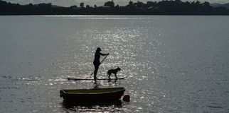 Silhouette woman and dog on standup paddleboard. Royalty Free Stock Image