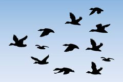 Free Silhouette Vector Of A Flying Duck Stock Image - 186187941