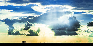 Silhouette of vegetation and a sky full of clouds Stock Photos