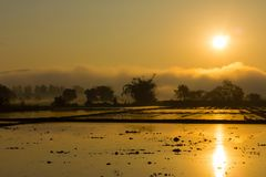 Silhouette view background of rice field before planting. Sunset Royalty Free Stock Image