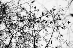 Avian flock Stock Photo