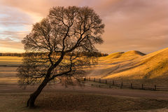 Silhouette. View of the King's graves and a tree in Gamla Uppsala, Sweden stock images