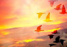 Silhouette view of pigeons under twilight sky Stock Image