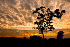 Silhouette view of rural tree and plant with twilight sky in Thailand Stock Photography