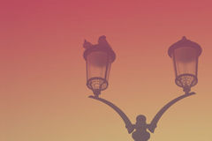Silhouette of a vintage streetlight on sunset background. Doves Stock Image