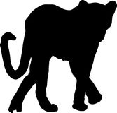 Silhouette of a walking cheetah Stock Photos