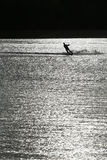 Silhouette waterskiing man in lake black and white. 