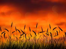 Silhouette of wheat when of sunset Royalty Free Stock Photos