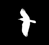 Silhouette of a white crow on a black background Royalty Free Stock Photo