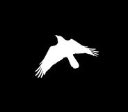 Silhouette of a white crow on a black background Stock Image