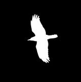 Silhouette of a white crow on a black background.  Royalty Free Stock Photography