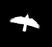 Silhouette of a white crow on a black background.  Stock Photo