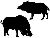 Silhouette of wild boar Royalty Free Stock Photo