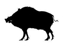 Silhouette of wild boar. Wildlife series Stock Image