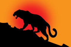 Silhouette of wild cat on red. Black silhouette of wild cat on red background Stock Photo