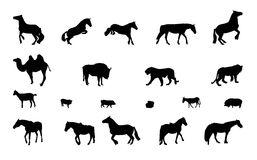Silhouette of Wild and Domestic Animals. Black & White. Stock Images