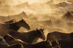 Silhouette of wild horses in sunset Royalty Free Stock Images