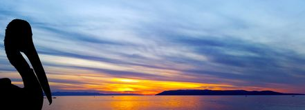 Silhouette of a wild pelican with Croatian sunset - Makarska Stock Images
