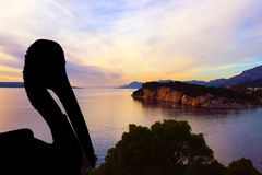 Silhouette of a wild pelican with Croatian sunset - Makarska Stock Photography