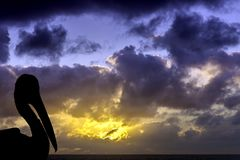 Silhouette of a wild pelican with dramatic sunrise over the ocean - Los Cocoteros, Lanzarote Royalty Free Stock Photos