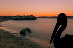 Silhouette of a wild pelican with sunset in Podgora, Croatia Royalty Free Stock Photo