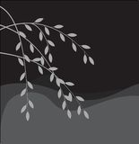 Silhouette of willow branch Stock Photos