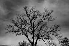 Silhouette of a winter tree Royalty Free Stock Images