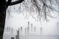 Tree and marina docks in mist Royalty Free Stock Photos
