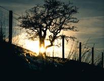 Silhouette of winter tree stock photos